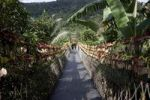 Thumbnail Suspension bridge amidst plants, Hainan Province, China, Asia