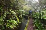 Thumbnail path with irrigation canal Levada do Norte - Madeira