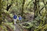 Thumbnail Man and woman hiking on a forest trail, laurel forest, Garajonay National Park, La Gomera, Canary Islands, Spain, Europe