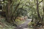 Thumbnail Path in a laurel forest, Garajonay National Park, La Gomera, Canary Islands, Spain, Europe