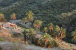 Thumbnail House and palm trees, Las Hayas, La Gomera, Canary Islands, Spain, Europe