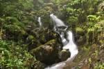 Thumbnail waterfall at Levada do Norte - Madeira