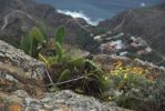 Thumbnail View of Playa de Benijo beach and Benijo village, Tenerife island, Canary Islands, Spain, Europe