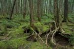 Thumbnail Forest, Minamisaku District, Nagano, Japan, Asia