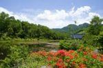Thumbnail River, vegetation, Shibutouge, Shiga Kogen, Nagano, Japan, Asia