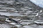 Thumbnail Terraced vineyards in winter, UNESCO world heritage site, Lavaux near Rivaz, Canton Vaud, Switzerland, Europe