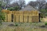Thumbnail Traditional African farm with a new reed fence, Khwai Development Project in Maun, Botswana, Africa