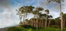 Thumbnail Coastal forest on the western beach of the Darss, Nationalpark Vorpommersche Boddenlandscape national park, Mecklenburg-Western Pomerania, Germany, Europe