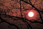 Thumbnail Setting sun framed by a tree in winter, Saxony-Anhalt, Germany, Europe