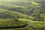 Thumbnail Tea plantations in Munnar, Western Ghats, Kerala, South India, India, Asia