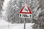 Thumbnail Road sign, Caution deer crossing, Oetscher-Tormaeuer Nature Park, Mostviertel, Must Quarter, Lower Austria, Austria, Europe