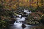 Thumbnail Stream in autumn, Ilse, Ilsetal valley, Harz, Saxony-Anhalt, Germany, Europe
