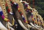 Thumbnail Decorated elephants, Pooram festival, Thrissur, Kerala, South India, India, Asia