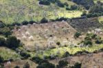 Thumbnail Blossoming Almond (Prunus dulcis) trees, view from Puig de Randa, Majorca, Balearic Islands, Spain, Europe