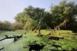 Thumbnail Danube Delta, Murighiol, Romania, Europe