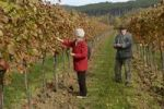 Thumbnail Retired couple in a vineyard, Grossau, Lower Austria, Austria, Europe