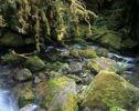 Thumbnail Creek in a rainforest, New Zealand