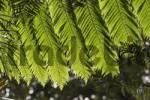 Thumbnail Fern - Botanical Garden in Funchal - Madeira
