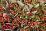 Thumbnail Bunches of flowers at a market stand, tulips (Tulipa)