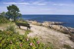 Thumbnail Coastal landscape with bench and wild roses (Rosa rugosa) at the Hammer Odde northern tip of Bornholm, Denmark, Europe