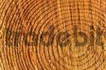 Thumbnail tree rings, pine wood