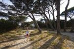 Thumbnail 7-year-old girl walking under Umbrella Pines at Palombaggia beach, south-east coast, Corsica, France, Europe