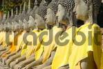 Thumbnail Many Buddha figures in a row with yellow cloth Wat Yai Chai Mongkol Ayutthaya Thailand