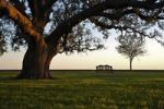 Thumbnail A grand oak tree overhangs a lone bench in the evening