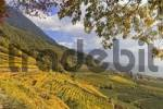 Thumbnail Algunder Waal canal hiking trail beneath the autumn colored vine yards, near Meran, South Tyrol, Italy