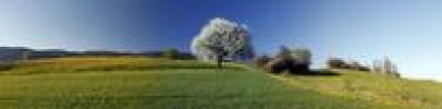 Thumbnail Panorama of the cherry blossom, Aedermannsdorf, Canton Solothurn, Switzerland, Europe