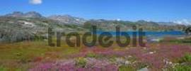 Thumbnail flowering meadow and Crater lake Chilkoot Trail British Columbia Canada