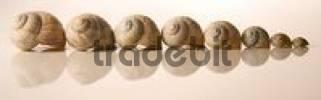 Thumbnail snake shells