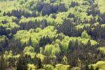 Thumbnail View from Mt. Grosser Falkenstein, Zwiesler Waldhaus, Nationalpark Bayrischer Wald national park, Bavaria, Germany, Europe