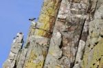 Thumbnail Vulture rocks in Monfraguee National Park, Extremadura, Spain, Europe