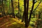 Thumbnail autumn forest