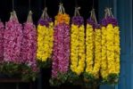 Thumbnail Garlands of flowers, flower market, Tiruvanathapuram, Trivandrum, Kerala, South India, India, Asia