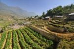 Thumbnail Mountain landscape with farm, vegetable field, rice farmers, rice terraces, rice paddies in Sapa or Sa Pa, Lao Cai province, northern Vietnam, Vietnam, Southeast Asia, Asia