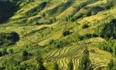 Thumbnail Green rice terraces, rice paddies in Sapa or Sa Pa, Lao Cai province, northern Vietnam, Vietnam, Southeast Asia, Asia