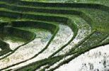Thumbnail Green rice terraces, rice paddies near Sapa, Sa Pa, Lao Cai province, northern Vietnam, Vietnam, Southeast Asia, Asia
