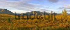 Thumbnail Denali Nationalpark in autumn area between Riley Creek and Savage RiverAlaska USA