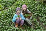 Thumbnail Two girls picking Ramsons or wild garlic (Allium ursinum)