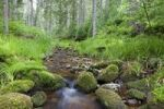 Thumbnail Idyllic mountain stream in the northern Black Forest, Forbach, Herrenwies, Baden-Wuerttemberg, Germany, Europe
