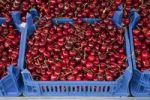 Thumbnail Box of cherries at a market stall
