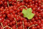 Thumbnail Red Currants (Ribes rubrum) with a leaf