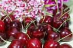 Thumbnail Cherry sort Germersdorfer