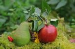 Thumbnail Pear and apple, autumnal still life
