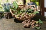 Thumbnail Wicker basket with walnuts (Juglans regia) on a rustic wooden table