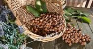 Thumbnail Wicker basket with hazelnuts (Corylus avellana) on a rustic wooden table