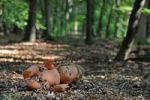 Thumbnail Naked doll in the woods, symbolic image for child abuse, kidnapping