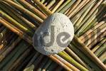 Thumbnail fresh rattan or rotang rods, Kachin State, Myanmar